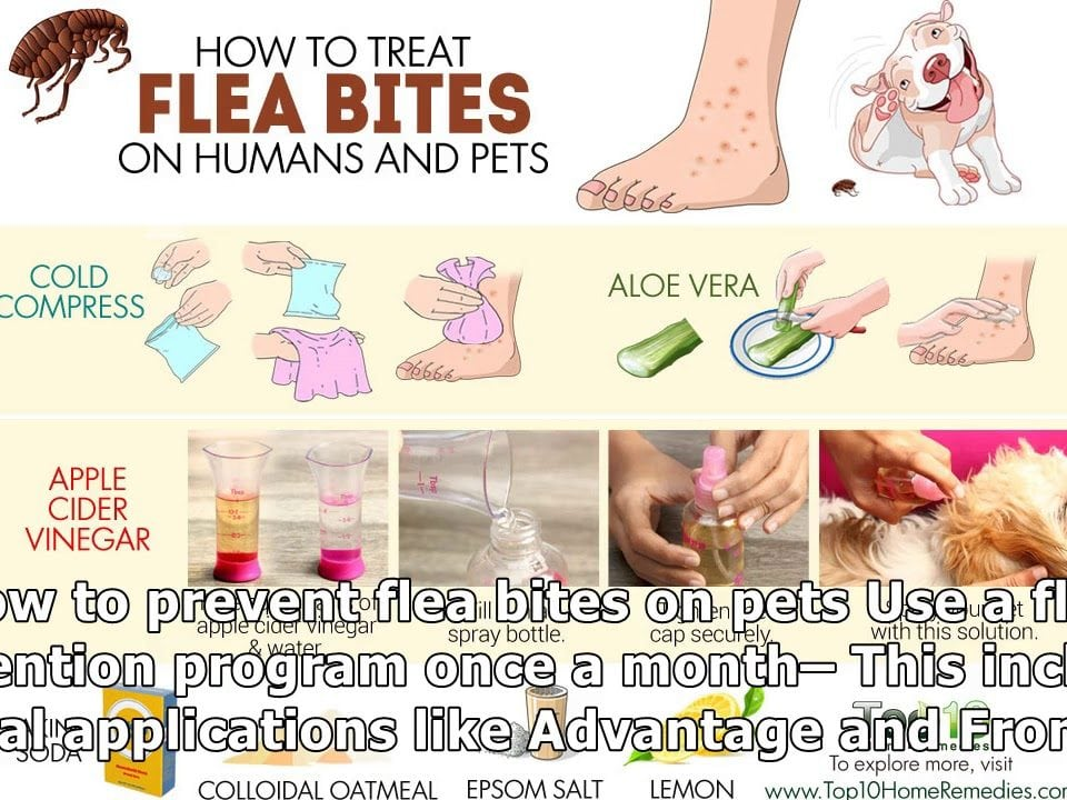 preventing flea bites on humans